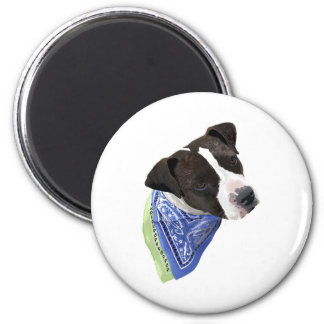 American Staffordshire Terrier-Aggie Magnet