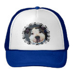 American Staffordshire Terrier-Am Staff Photo Hats