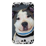 American Staffordshire Terrier-Am Staff Photo Case For iPhone 4