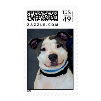 American Staffordshire Terrier-Am Staff Photo Postage Stamp