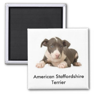 American Staffordshire Terrier, American Staffo... 2 Inch Square Magnet