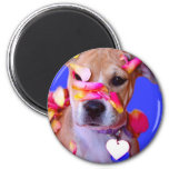 American Staffordshire Terrier Boxer Mix Puppy Dog 2 Inch Round Magnet