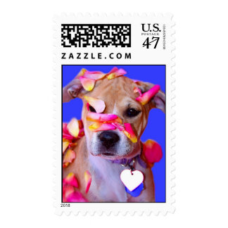 American Staffordshire Terrier Boxer Mix Puppy Dog Postage