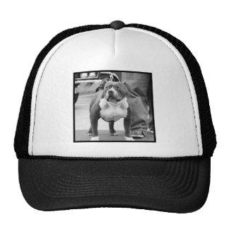 American Staffordshire Terrier cap Trucker Hat
