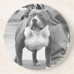 American Staffordshire Terrier Coaster