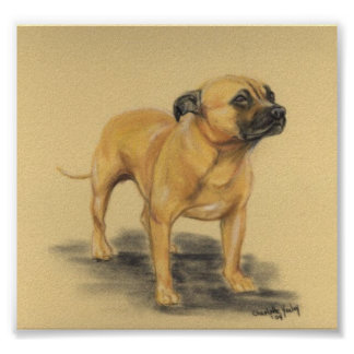 """American Staffordshire Terrier"" Dog Art Print"