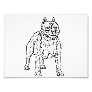 American Staffordshire Terrier Dog Photo Print