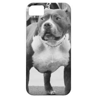 American Staffordshire terrier iPhone SE/5/5s Case