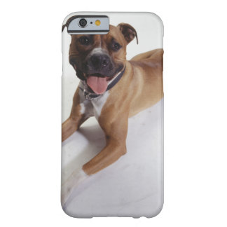 American Staffordshire Terrier lying down, Barely There iPhone 6 Case