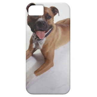 American Staffordshire Terrier lying down, iPhone SE/5/5s Case