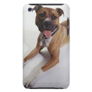 American Staffordshire Terrier lying down, iPod Touch Cover