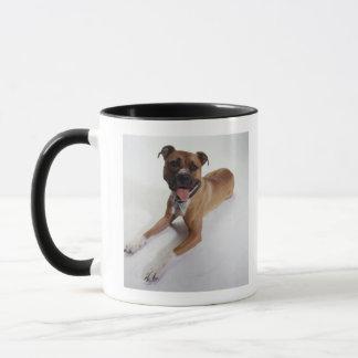 American Staffordshire Terrier lying down, Mug