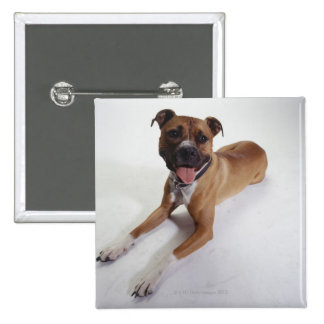 American Staffordshire Terrier lying down, Pinback Button