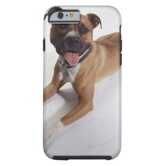 American Staffordshire Terrier lying down, Tough iPhone 6 Case