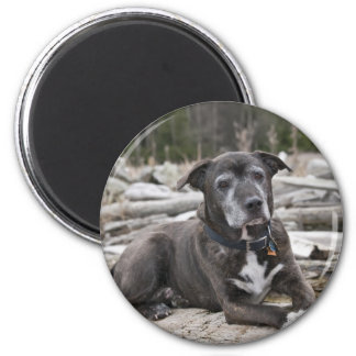 American Staffordshire Terrier - Magnet
