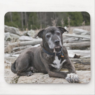 American Staffordshire Terrier - Mousepad