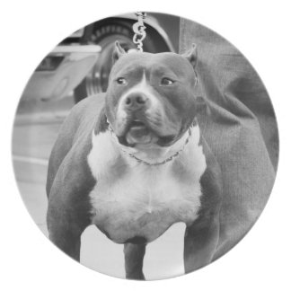 American Staffordshire terrier Dinner Plates