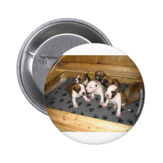 American Staffordshire Terrier Puppies Dog Pinback Button