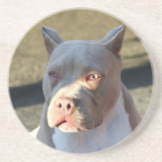 American Staffordshire Terrier Puppy coaster