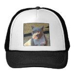 American Staffordshire Terrier puppy Hat