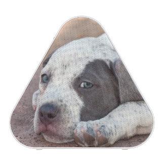 American Staffordshire Terrier puppy lying down Bluetooth Speaker
