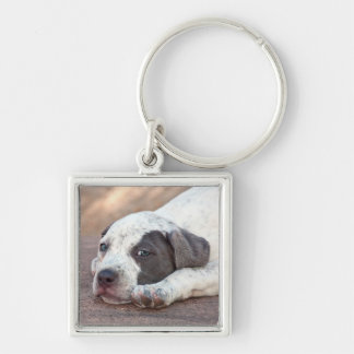 American Staffordshire Terrier puppy lying down Keychain