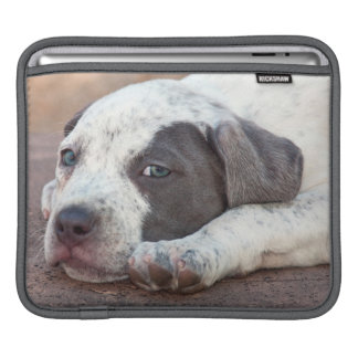 American Staffordshire Terrier puppy lying down Sleeve For iPads