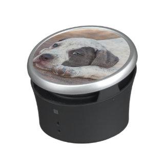 American Staffordshire Terrier puppy lying down Speaker