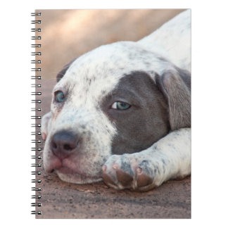 American Staffordshire Terrier puppy lying down Spiral Notebook