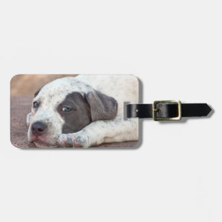 American Staffordshire Terrier puppy lying down Tag For Luggage