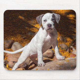 American Staffordshire Terrier puppy Portrait 2 Mouse Pad