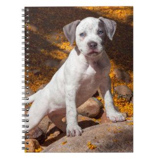 American Staffordshire Terrier puppy Portrait 2 Spiral Notebook
