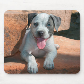 American Staffordshire Terrier puppy Portrait Mouse Pad