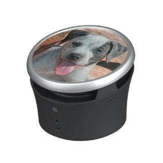 American Staffordshire Terrier puppy Portrait Speaker