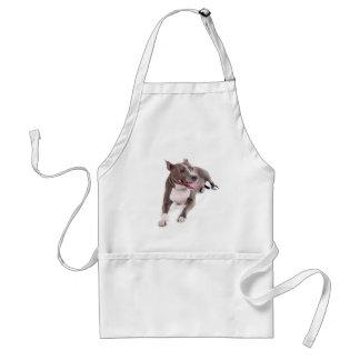 american staffordshire terrier tabliers