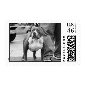 American Stafforshire Terrier Postage