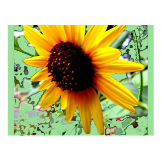 American Sunflower  Minty Mosiac by SHARLES Postcard