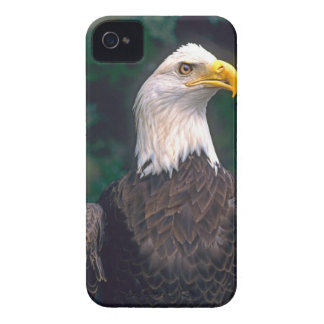 American Symbol of Freedom The Bald Eagle in the iPhone 4 Case