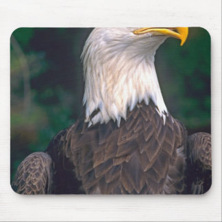 American Symbol of Freedom The Bald Eagle in the Mouse Pad