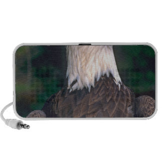 American Symbol of Freedom The Bald Eagle in the Travelling Speakers