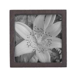 American Tiger Lily (Black & White) Gift Box