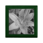 American Tiger Lily (Black & White) Gift Boxes