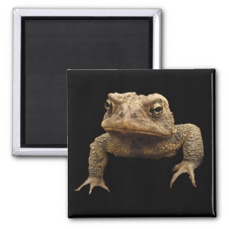 American Toad 2 Inch Square Magnet