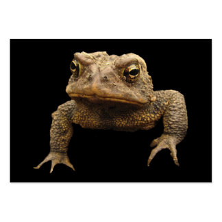 American Toad ATC Large Business Cards (Pack Of 100)