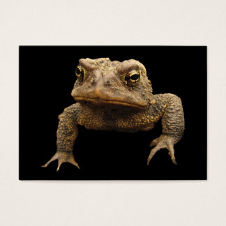 American Toad ATC Business Card