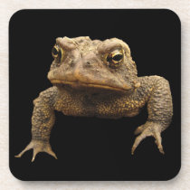 American Toad Beverage Coaster