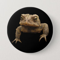 American Toad Button