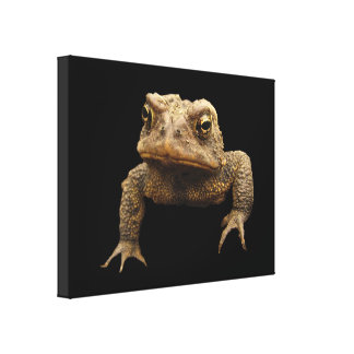 American Toad Canvas Prints