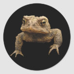 American Toad Round Sticker