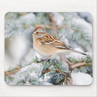 American Tree Sparrow in winter Mouse Pad